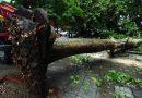 موجة الطقس السيء تتسبب في دمار واسع النطاق في غرب اليونان والبحر الأيوني